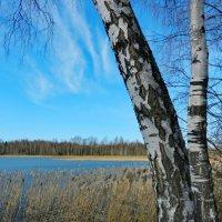 13 марта, озеро (1) :: Юрий Бондер