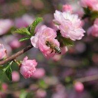 Весна пришла. :: Андрей