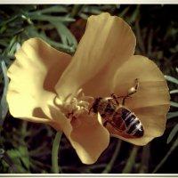 Пчёлка :: Евгений Кочуров