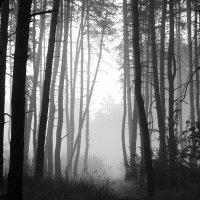 Туман в лесу :: Иван Сагиров