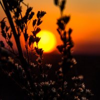 И солнце иногда засыпает... :: Ольга Семенова