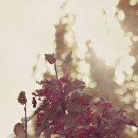 ягодки :: Анастасия Macintosh