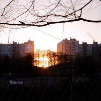 Огненная роща :: Ivan Zaytcev