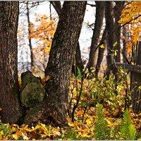 В осеннем лесу :: Татьяна Губина