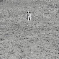 щенок на прогулке :: Юлия Закопайло