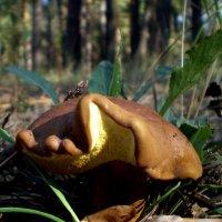 Необычный грибок :: Татьяна Пальчикова