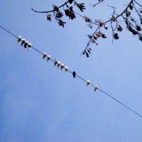 Люди на улице подняли головы: голуби, голуби, белые голуби! :: Ольга Кривых