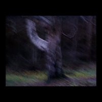 Загадочный лес :: vadim