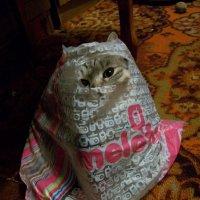Кэтти в пакете :: Галина Pavel