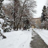 Утренняя мартовская аллея после снега 10.03.2014 :: Александр