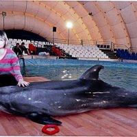 В Московском передвижном дельфинарии. :: Anna Makarova