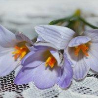 весенний букетик :: Анна Иванова