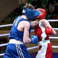 Бокс в лицах. :: Сергей Андреев