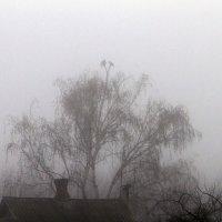 Туман :: Yuri Chudnovetz