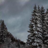 Дорога по зимнему лесу... :: Александр Никитинский