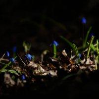 весна :: Евгений Евгений