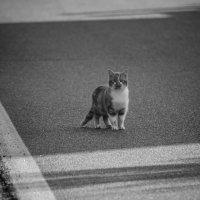 Стою я один на дороге :: Александра Дядюченко
