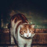 Кот,который живет в подъезде. :: Марина Матвеева