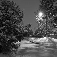 Зимняя ночь :: Igor Pavlyuk