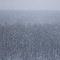 Глобальное потепление - 2 (Подмосковье, вторая половина марта) :: Николай Ефремов