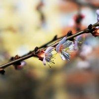 Опять весна на белом свете... :: Михаил Баевский