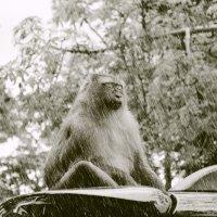 Медитация под дождем:-) :: Ксения Соболева