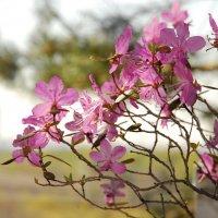 весна :: Аля Бирюза
