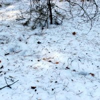 На снегу :: Александр Садовский