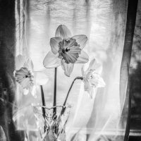 словно из стекла... :: Natalia Fedina