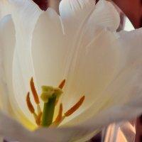 Весна :: Анна Пацакула