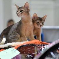 Миром правят кошки ??? :: Ирина Зайцева