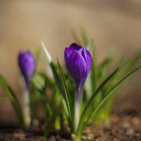 дети весны :: gribushko грибушко Николай
