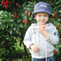 Сибирские яблочки! :: Евгения Мазурова