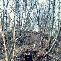 Заброшенный погреб :: Juliya Fokina