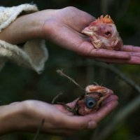 Диковины в дремучем лесу :: Tristana Tiamat