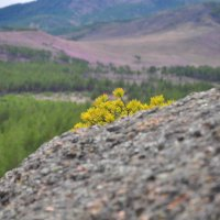 Сопки Бурятии :: Сергей Жиляев