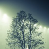 Туманный рассвет. :: Александр Гребенюк