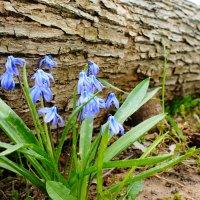 Весна :: Петр Стрелецкий