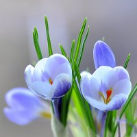 Весна на окошке :: Ольга Винницкая (Olenka)