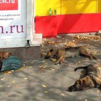 После ночного интернета :: Генрих Сидоренко