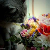 Кошка и цветы :: Ольга Милованова