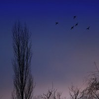 Вечерний полёт :: Виктор Масальский