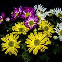 Цветики :: Анна Хотылева