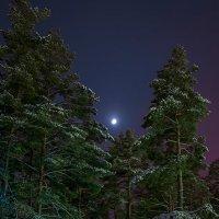 лесная луна :: Василий Либко