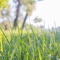 Роса на траве. Утро :: Константин Диордиев