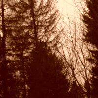 Лес(сепия) :: Katherine Mozgo