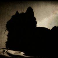 моя Фрея :: Лидия Кичигина