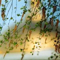 Воскрешение весны. Купол Покровского собора :: Генрих Сидоренко