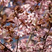 Весна :: tobol-b