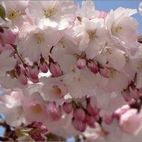 Весна! :: DimCo ©